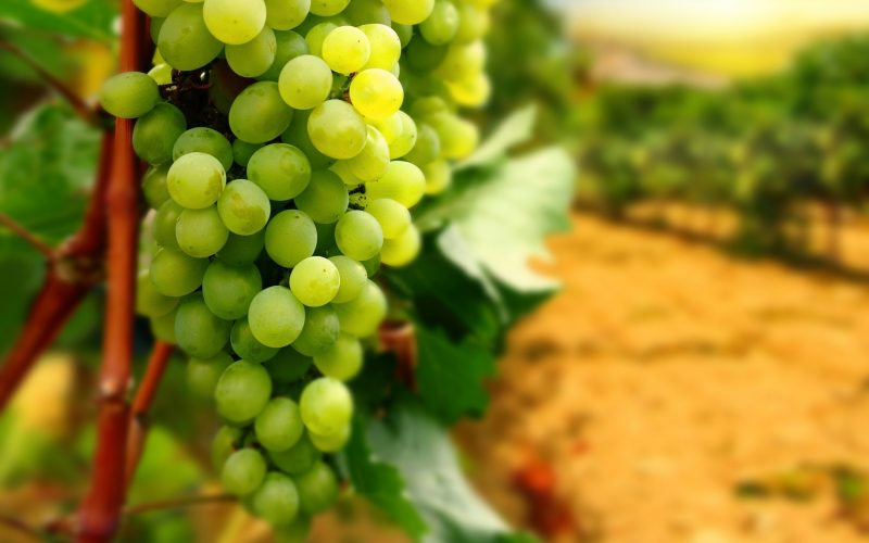 white-grapes-2560x1600-wallpaper-14258