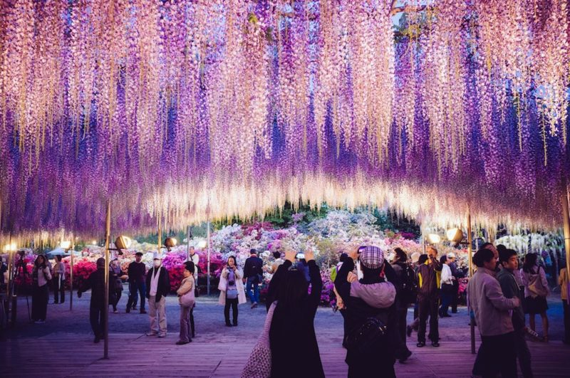 PAY-Ashikaga-Flower-Park
