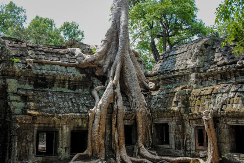 The-Tree-Temple-Angkor-Cambodia
