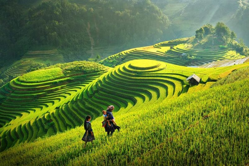 Travelbay-Vietna-and-Sapa-Rice-fields_copy